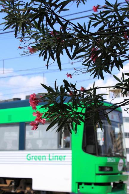 green l[1].jpg